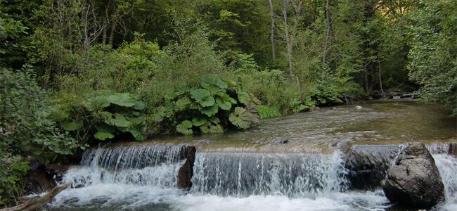 Селченската река край Канарата