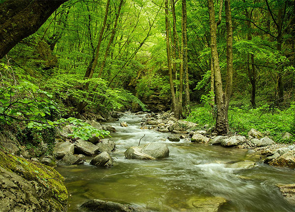 река Селченска